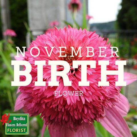 Birth Flower November Month