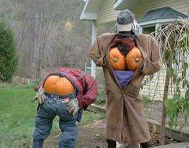 Funny Halloween Pictures HD