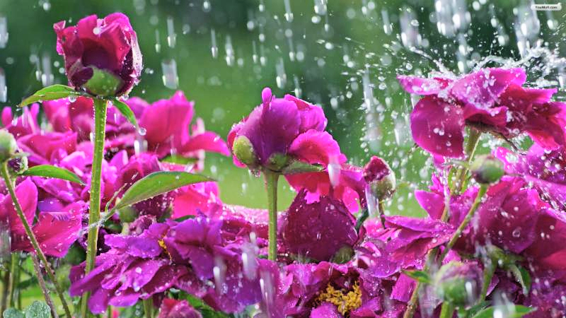 April Showers Bring May Flowers Pic