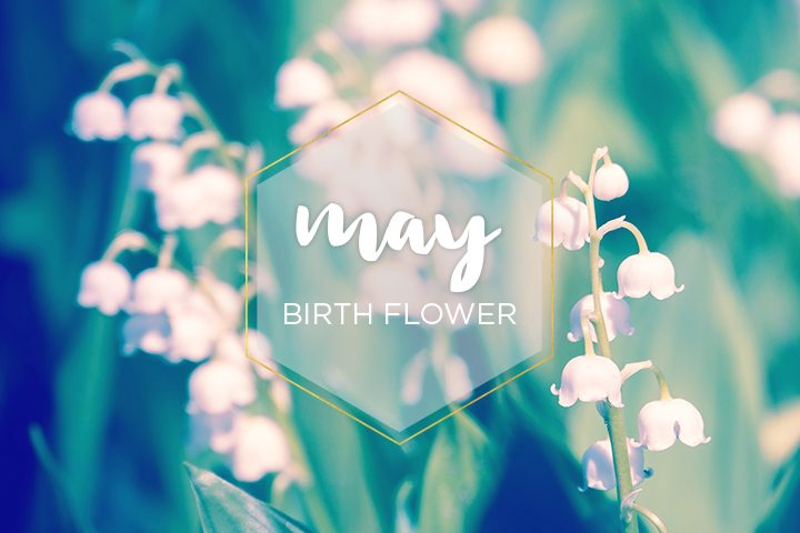 May Birth Flower